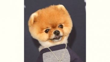 Jiffpom Age and Birthday